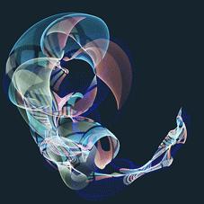 X ray of bird foetus
