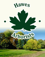Hawes Arborists